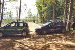 Circa 150 alberi di faggio tagliati abusivamente a Lamezia, un denunciato