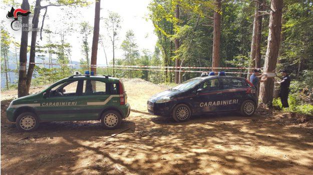 alberi, ambiente, Catanzaro, Calabria, Cronaca