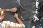 La tartaruga Caretta Caretta torna a nidificare a Lipari - Foto