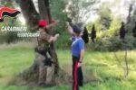 Coltivazione con 3.200 piante di canapa indiana, tre arresti a Taurianova - Video