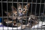 In Sicilia arriva lo stop a tenere troppi gatti in casa, se sono pericolosi per i vicini