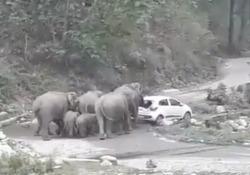 Le auto dei turisti bloccano il passaggio: gli elefanti (arrabbiati) le spingono nel fosso In India si dovrebbe prestare attenzione a dove si parcheggia la propria macchina - CorriereTV