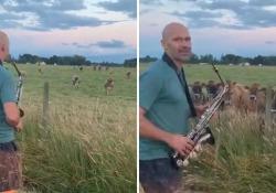 Le mucche che amano il suono del sax Un uomo si è esercitato con il suo strumento e ha richiamato un intero branco di animali - Corriere Tv