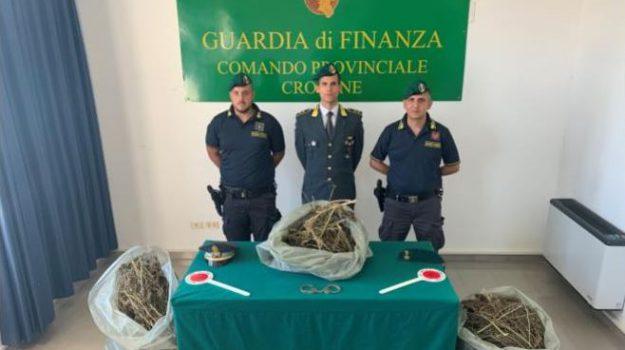 marijuana isola capo rizzuto, Antonio Scerbo, Domenico Magnolia, Giuseppe Mancuso, Catanzaro, Calabria, Cronaca
