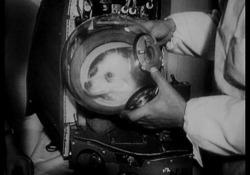 Quando nello spazio ci andavano i cani e le scimmie La ricerca spaziale deve a loro la sua evoluzione - Ansa