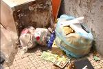 Lotta all'abbandono di rifiuti a Falerna, tra i multati anche turisti del Nord Italia