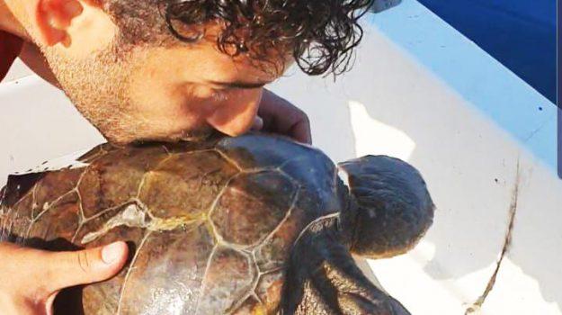 mare, roccalumera, tartarughe marine, Messina, Sicilia, Società