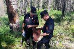 Abbatte un albero di pregio e ruba la legna, denunciato un 54enne di Paola