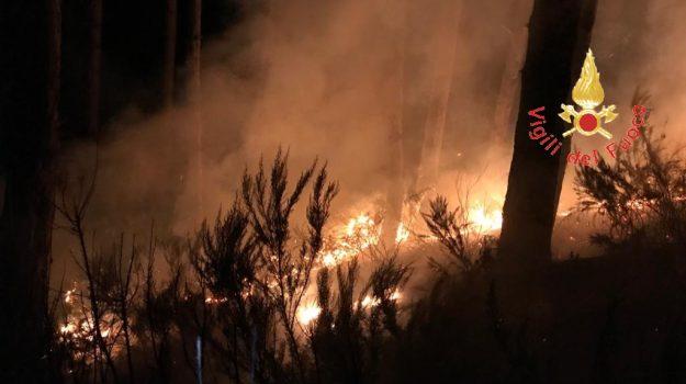 incendi lamezia, presila catanzarese, Catanzaro, Calabria, Cronaca