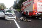 Incidente a Polistena, scontro tra auto e furgone: due feriti - Foto