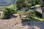 Tragedia sfiorata a Taormina, ramo cade sulla spiaggia di Isola Bella: 7 feriti