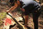 Tagliano abusivamente 27 alberi di faggio, cinque denunce nel Cosentino
