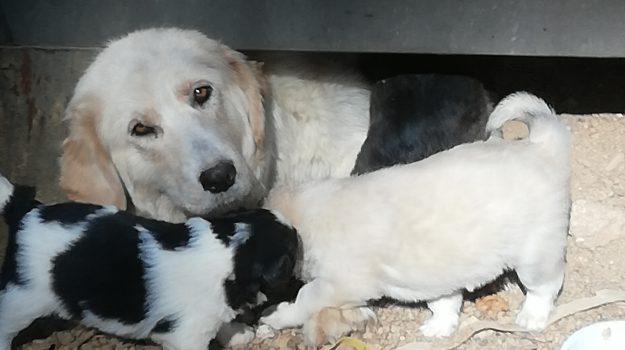 cane randagio camigliatello, Cosenza, Calabria, Cronaca
