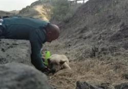 Cane salvato dalle fiamme nell'inferno di Gran Canaria: le coccole del poliziotto A intervenire la Guardia Civil Spagnola - Ansa