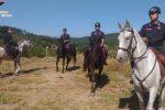 Carabinieri a cavallo scovano una mandria non in regola: sanzioni per 3.000 euro