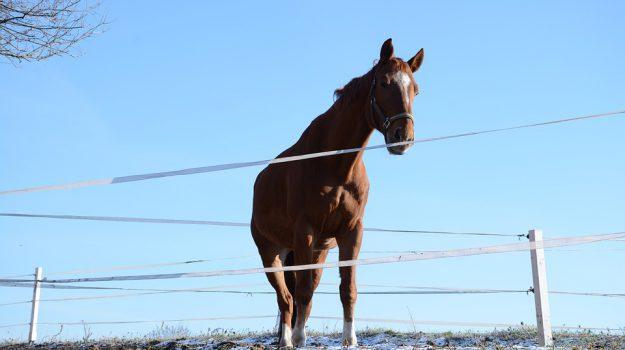 cavalli, cus, equitazione, Messina, Sicilia, Sport