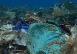 Grecia: ecco la barriera corallina di plastica Quella che a prima vista sembra una barriera corallina al largo dell'isola greca di Andros, in realtà è immondizia - CorriereTV