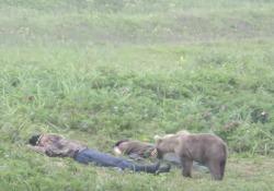 Il modo peggiore per essere svegliati? Da un orso (o meglio: un orsetto) Il cucciolo di orso sveglia due persone che stanno schiacciando un pisolino in un prato in Russia - CorriereTV