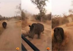 Il rinoceronte (arrabbiato) insegue il fuoristrada coi turisti Safari al cardiopalma per un gruppo di turisti in Africa - CorriereTV
