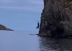 Il tuffo dell'alce dalla scogliera Il filmato dall'isola canadese di Terranova - CorriereTV