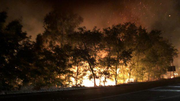 calabria, incendi, Fabio Cuzzocrea, Oliviero Dodaro, Calabria, Cronaca