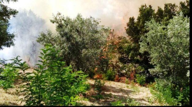 incendio Tiriolo, Catanzaro, Calabria, Cronaca