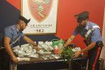 Marijuana nascosta in casa e nella biancheria intima: due arresti a Messina