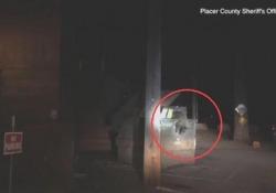 Orsetto incastrato in un cassonetto si lamenta, poliziotti lo liberano L'episodio nella Sierra Nevada: il piccolo, grazie a una scala, è sgattaiolato fuori e ha raggiunto la famiglia - Ansa