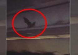 Paura tra i passeggeri: a bordo dell'aereo c'è un pipistrello Il volatile sull'aereo della compagnia low cost Spirit Airlines - CorriereTV