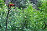 Scoperte 7 piantagioni di cannabis nelle Serre Vibonesi, avrebbero fruttato 3 milioni