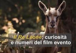 Tutti i cartoni animati Disney diventati film: dal Re Leone a Cenerentola Il Re Leone: curiosità e numeri del film evento - Ansa