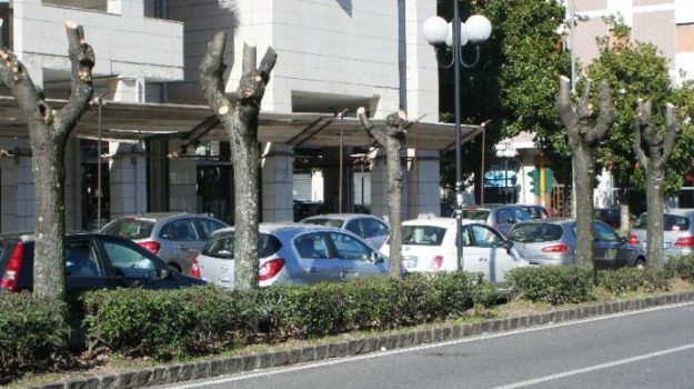 alberi Cosenza, Comitato Alberi Verdi, Manutenzione del verde, Cosenza, Calabria, Cronaca