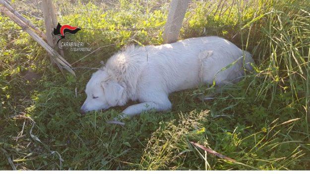 bracconaggio Lamezia, cane intrappolato Lamezia, Catanzaro, Calabria, Cronaca