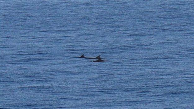 delfini, roccalumera, Messina, Sicilia, Società
