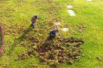 Calabria, i cinghiali scavano sul prato della cittadella regionale