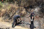 Appiccano un incendio in un bosco, indagati due giovani di Lattarico