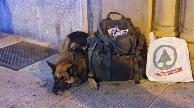 Messina, cane di un clochard morde bimba in via I Settembre: tensione fra le strade della movida