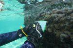 Biodiversità marina, scoperta una specie rara nei mari calabresi