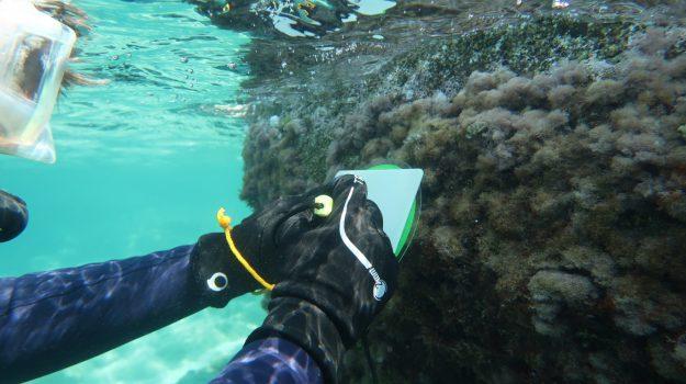 biodiversità marina, mare calabria, Patella ferruginea, Emilio Cellini, Laura Pirrera, Rossella Stocco, Calabria, Società