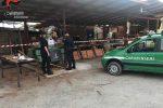 Violazione della normativa ambientale, sequestrata segheria abusiva a Montalto