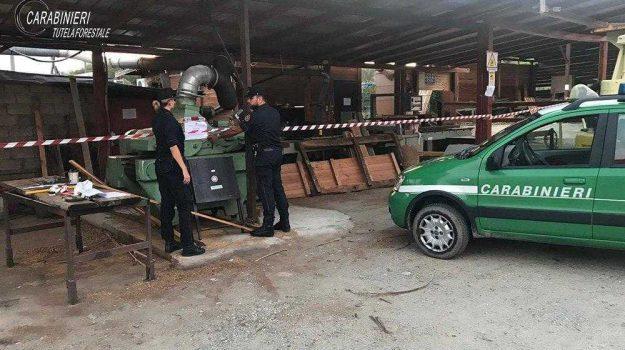 segheria abusiva Montalto, violazione normativa ambientale, Cosenza, Calabria, Cronaca
