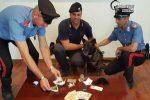 Beccato con 14 grammi di marijuana e 4 di cocaina: arrestato pusher a Mendicino