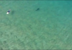 Australia, lo squalo si avvicina al surfista: lo avvisano con il drone L'operatore di droni amatoriali Christopher Joye stava pattugliando la zona di Werri Beach, nel Nuovo Galles del Sud - Corriere Tv