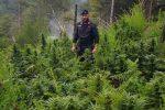 Colpo ai produttori di canapa del Reggino, sequestrate oltre 600 piante tra San Luca e San Lorenzo