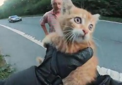 Gatto in mezzo alla strada, due uomini fermano il traffico per salvarlo: il video diventa virale Le immagini pubblicate su Twitter con i due che si chiedono come abbia fatto l'animale a finire in quel punto così pericoloso - Corriere Tv