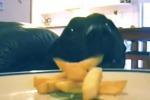 Il cane aspetta che la padrona esca dalla stanza per rubare la patatina