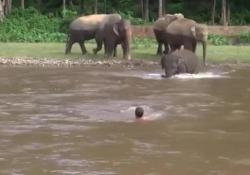 Pensa che stia affogando: l'elefantino si butta in acqua per salvare un uomo Le immagini dall'India - Corriere Tv