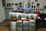 Viaggiava con 55 chili di marijuana, catanese arrestato a Villapiana