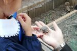 """""""La tartaruga va a scuola"""", a Cosenza nascono tre testuggini"""