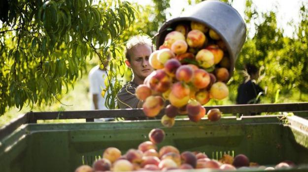 aiuti agroalimentari, coronavirus, Sicilia, Economia